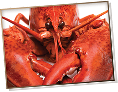 Picture of a cooked lobster facing forward